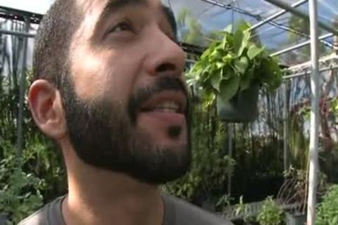 Bearded Hunk sucks My penis In A Greenhouse