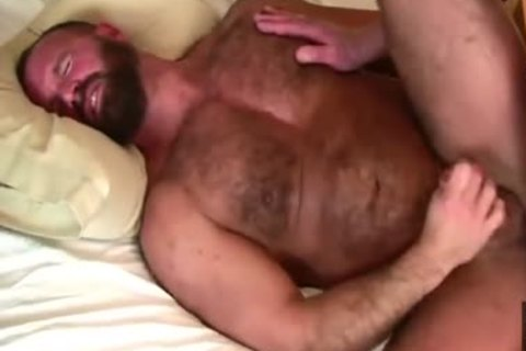 Daddy Bears poke In daybed
