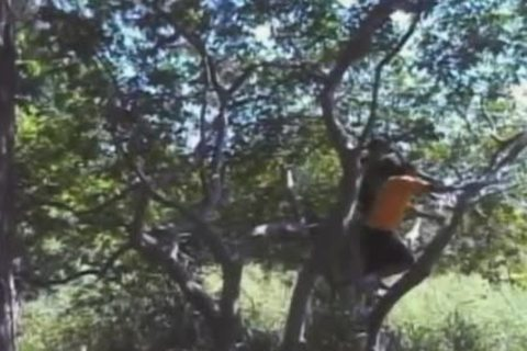 gay sex in a tree and on the ground